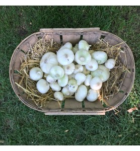 Oignons blancs